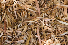 Many dry bamboo leaves as a background Royalty Free Stock Photos