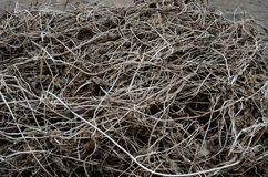 The many Dry brown cut vines are evenly textured intertwined on. Dark brown edged vines are evenly textured, intertwined and lie on the ground Royalty Free Stock Photos