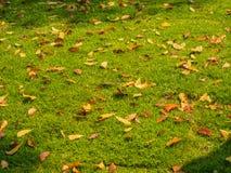 Dry leaf pile on the ground Stock Photos