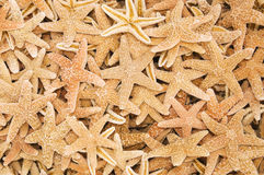 Many dry starfish Royalty Free Stock Photography