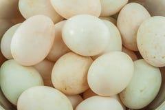 Many duck eggs Royalty Free Stock Photo