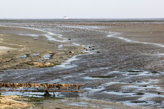 Many ducks in Waddenzee near dutch Ameland. The Wadden Sea is the largest unbroken system of intertidal sand and mud flats in the world. It is a large, temperate Royalty Free Stock Photography