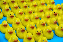 Many Ducky Toy Little Yellow Rubber Duck Bath Toy royalty free stock photos