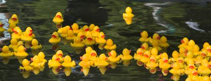 Many Ducky Toy Little Yellow Rubber Duck Bath Toy floating on the river stock images