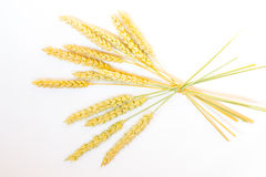 Many ears of ripe wheat tied in one branch Stock Photo