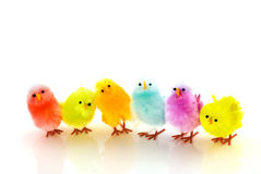 Many easter chickens. Many colored easter chickens in a row Stock Photography