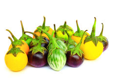 Many eggplant group isolated Royalty Free Stock Photography