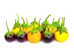 Many eggplant group isolated Royalty Free Stock Photos