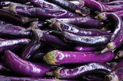Many eggplants Royalty Free Stock Image