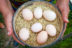 Many eggs in the plate with crops in the woman's hands. Image of many eggs in the plate with crops in the woman's hands royalty free stock image
