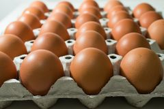 Many eggs are in the tray royalty free stock photography