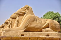Many Egyptian sculptures in row Royalty Free Stock Photos