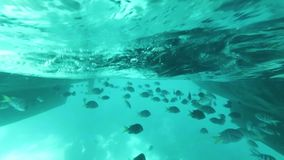 Many exotic fish are swimming under a boat in transparent turquoise water. Many exotic tropical fish are swimming under a boat in transparent turquoise water stock footage