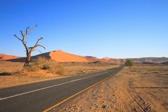 Namib desert: Early morning at Sossusvlei. The many faces of Sossusvlei; all are wonderful to see. From the good tarred road, through the dead tree, to the royalty free stock image