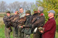 Many Falconers in the hands of golden eagles. Waiting to start hunting with predators royalty free stock photos