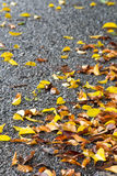 Many fall leaves on wet. Royalty Free Stock Images