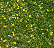 Many field flowers closeup Stock Images