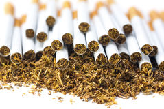 Many filter cigarettes on a heap of loose tobacco, closeup Stock Photo