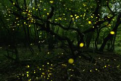 Many fireflies in the summer at the fairy forest. royalty free stock photos