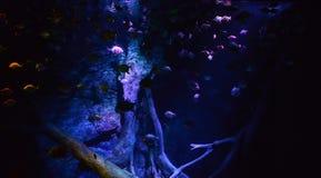 Many fish in aquarium Stock Images