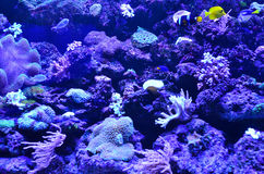 Many fish float on the background of coral and stones royalty free stock photos
