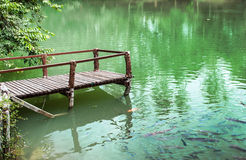 Many fish in green lake. Many kind of fish in green lake Royalty Free Stock Photography