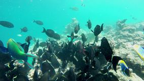 Many fish are looking for food. In the reef stock video footage