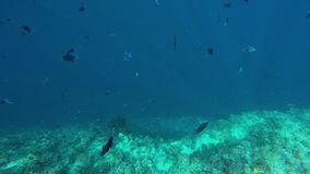 Many fish over a reef edge stock video