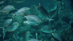 Many fish swim stock footage