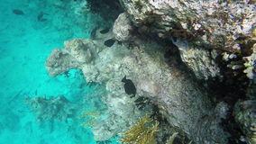 Many fish swim among corals stock video footage