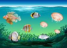 Many fish swimming under the ocean. Illustration Stock Images