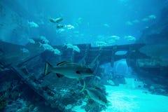 Many fishes in big blue aquarium. Beautiful underwater in aquarium stock images