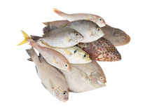 Many fishes isolated Stock Photos