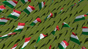Many flags of Italy blowing in the wind in green field. Stock Photography