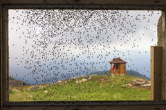 Many flies Stock Image