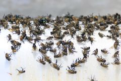 Many flies are glue traps.  stock images