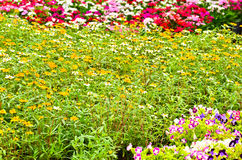Many flower Stock Image
