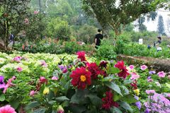 Many flower. Garden beside rode Stock Photos