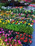 Many flower pots arranged for sale at outdoor market in street marketplace. Agriculture, Farm, Garden, Business concept Royalty Free Stock Images