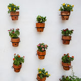 Many flower pots on white wall Royalty Free Stock Photo
