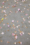 Many flower on road. In park Royalty Free Stock Photo