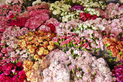 Many flower in shop Royalty Free Stock Images