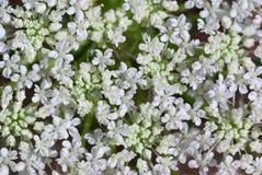 Many flowers Royalty Free Stock Image