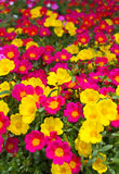 Many flowers. Stock Images