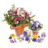 Many flowers Stock Image
