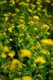 Many flowers Stock Photos