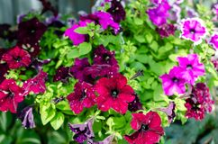 Many flowers different colors in summer stock images
