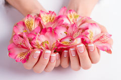 Many flowers in female hands. Beautiful french manicure stock photos