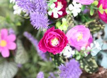 Many flowers in the floreal background purposely out-of-focus. 