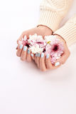 Many flowers in women`s hands. Beautiful female hands on a white background. Gently blue manicure royalty free stock images